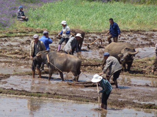 Farming's a muddy business in this part of the world.