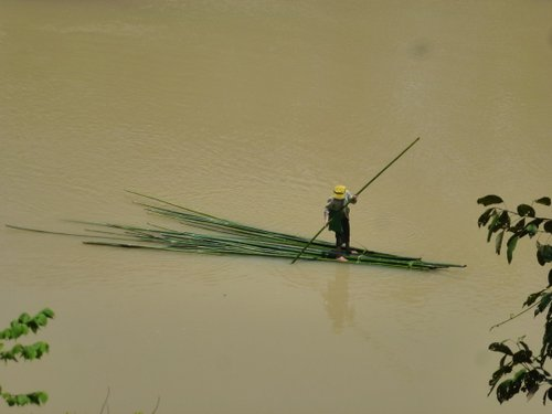 Transporting bamboo downriver