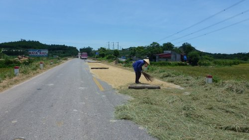 Rice and rice-stalks spread to dry on the Ho Chi Minh Highway