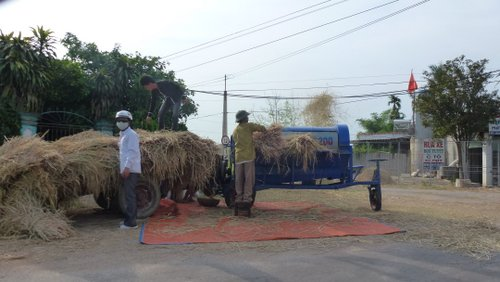 A rice threshing machine in action
