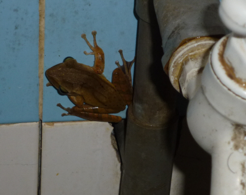 Cute little froggy in our bathroom.