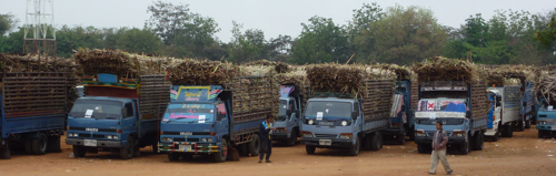 Is there a collective noun for sugar cane trucks?