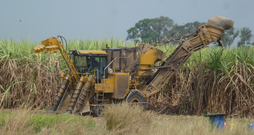 Like little boys the world over Keith is fascinated by machinery – we have lots of photos of this stunning sugarcane harvester.