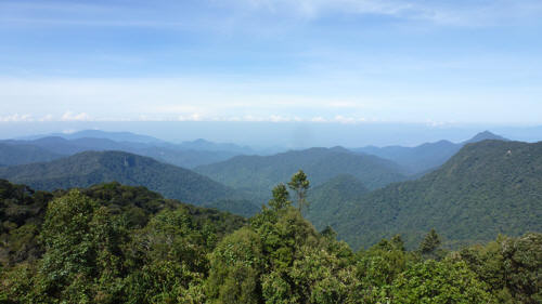 The view from Gunung Brinchang...not a plastic sheet in sight.