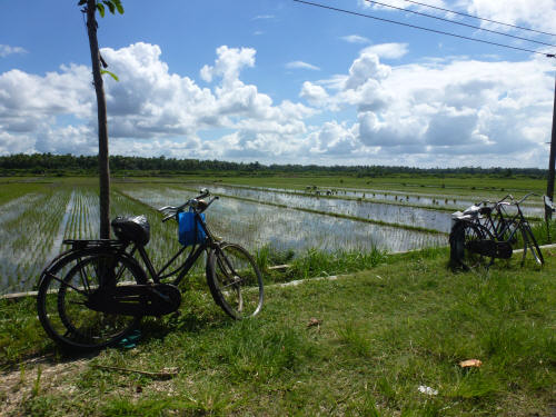 Rice paddies and bicycles.